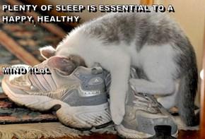 PLENTY OF SLEEP IS ESSENTIAL TO A HAPPY, HEALTHY  MIND !!LoL
