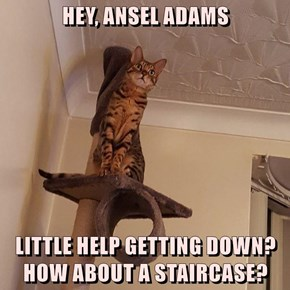 HEY, ANSEL ADAMS  LITTLE HELP GETTING DOWN?                     HOW ABOUT A STAIRCASE?