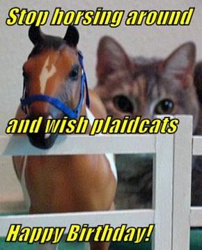 Stop horsing around and wish plaidcats Happy Birthday!
