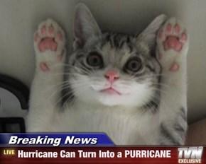 Breaking News - Hurricane Can Turn Into a PURRICANE