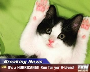 Breaking News - It's a HURRICANE!! Run fur yor 9-Lives!