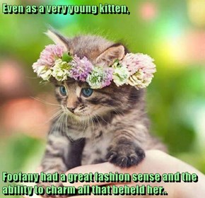 Even as a very young kitten,  Foofany had a great fashion sense and the ability to charm all that beheld her..