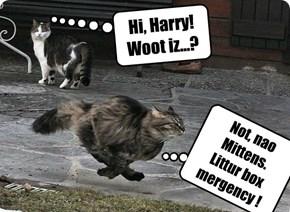 Hi, Harry! Woot iz...?