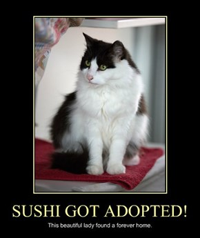 SUSHI GOT ADOPTED!