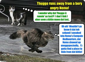 KKPS 2015: Thuggo runs for hiz lifes - ALL NINE OF DEM - after hims Campain helper Gordie sounded teh alarm that Nemo was coming back much sooner den antisipated!