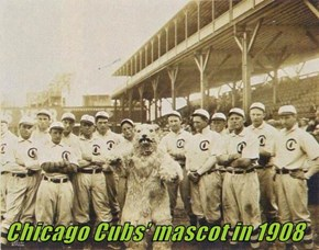 Chicago Cubs' mascot in 1908
