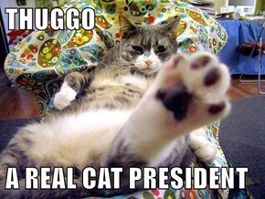 THUGGO  A REAL CAT PRESIDENT