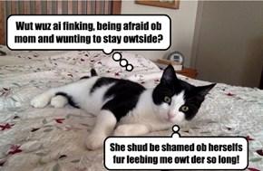 A cat's entitlement!