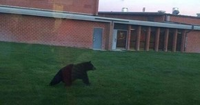 Break-In of the Day: Bear Sneaks Into Montana High School to Make New Friends