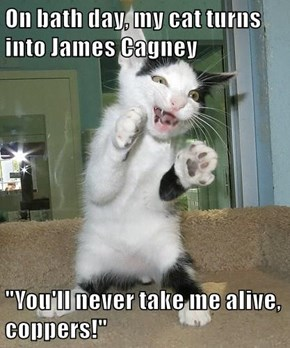 """On bath day, my cat turns into James Cagney  """"You'll never take me alive, coppers!"""""""