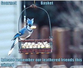 Gourmet                                Basket  (please remember our feathered friends this winter)
