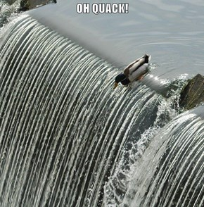 OH QUACK!