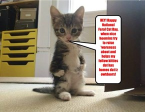 HEY! Happy National Feral Cat Day, when nice hoomins try to raise 'wareness about and helps my fellow kitties dat has homes dat iz owtdoors!