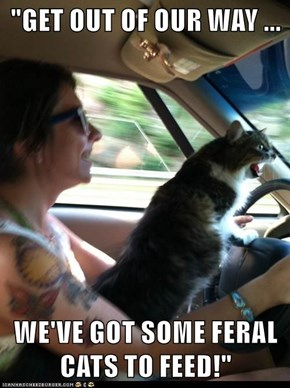 """""""GET OUT OF OUR WAY ...  WE'VE GOT SOME FERAL CATS TO FEED!"""""""