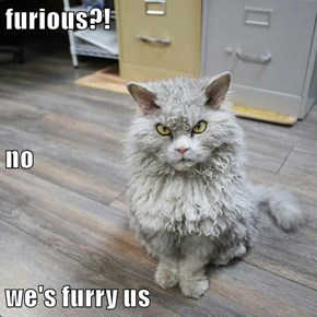 furious?! no we's furry us