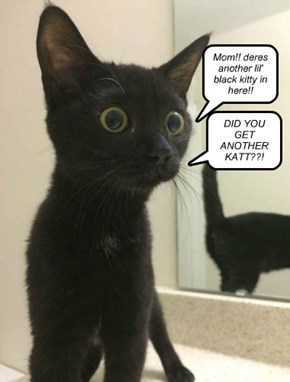 Mom!! deres another lil' black kitty in here!!