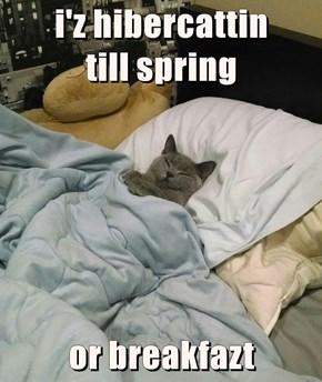 i'z hibercattin                        till spring  or breakfazt