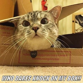 WHO DARES KNOCK ON MY BOX!!