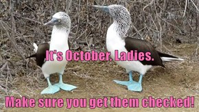 It's October, Ladies. Make sure you get them checked!