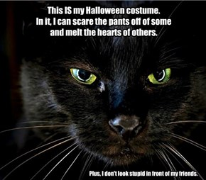Don't Buy Them Costumes And Keep Them Indoors!