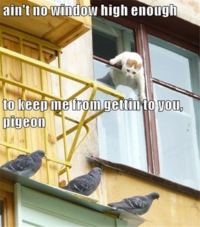 ain't no window high enough to keep me from gettin to you, pigeon