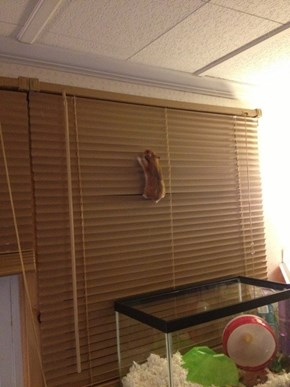 Hamster Obviously Has Plans to Make His Great Escape