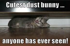 Cutest dust bunny ...  anyone has ever seen!