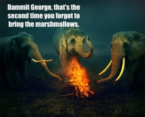 Dammit George, that's the second time you forgot to bring the marshmallows.