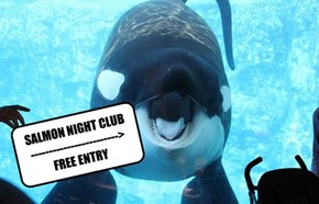 SALMON NIGHT CLUB: FREE ENTRY