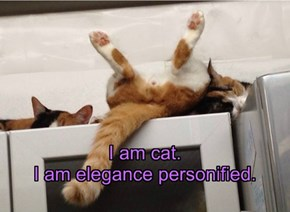I am cat. I am elegance personified.
