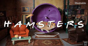 Remake of the Day: 'Friends' Starring Hamsters. Because Friday.