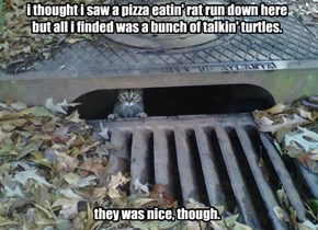 i thought i saw a pizza eatin' rat run down here but all i finded was a bunch of talkin' turtles.           they was nice, though.