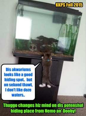 After Thuggo catches site ob Dooby an' Nemo walking down teh hallway to hims room, Thuggo furiously serches for a good hiding plase from doze too kitties!