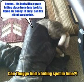 Thuggo may hav found teh purrfect hiding spot from Dooby an' Nemo!
