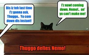 KKPS Fall 2015: Thuggo refuses to com down an' face Nemo!