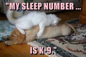 """MY SLEEP NUMBER ...  IS K-9."""
