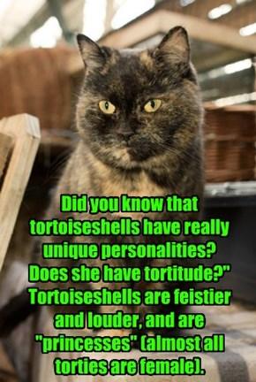 Tortitude!