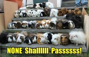 NONE  Shallllll  Passssss!
