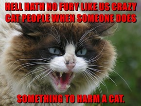 HELL HATH NO FURY LIKE US CRAZY CAT PEOPLE WHEN SOMEONE DOES   SOMETHING TO HARM A CAT.