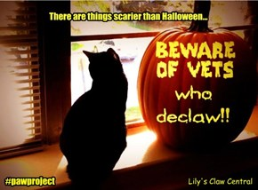 Beware of vets who declaw!