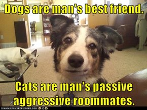 Dogs are man's best friend.  Cats are man's passive aggressive roommates.