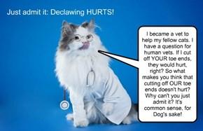 Declawing is Amputation!