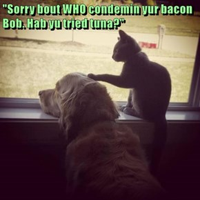 """Sorry bout WHO condemin yur bacon Bob. Hab yu tried tuna?"""