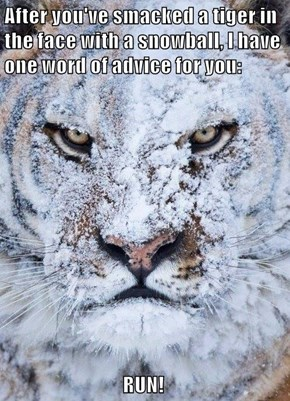 After you've smacked a tiger in the face with a snowball, I have one word of advice for you:                                  RUN!