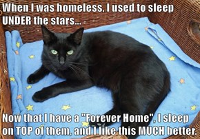 "When I was homeless, I used to sleep UNDER the stars...  Now that I have a ""Forever Home"", I sleep on TOP of them, and I like this MUCH better."