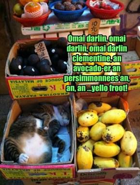 Omai darlin, omai darlin, omai darlin clementine, an avocado-er an persimmonnees an, an, an ...yello froot!