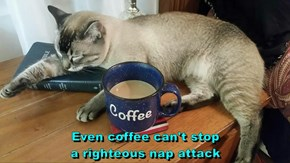 Even coffee can't stop                                       a righteous nap attack