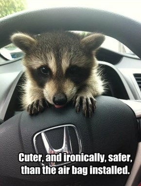 Cuter, and ironically, safer, than the air bag installed.