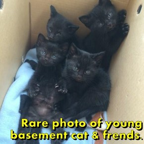 Rare photo of young basement cat & frends.