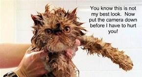 Wet cat woes